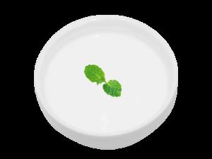 杏仁豆腐セット